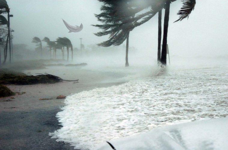 Golfilho é arrastado pelo vento durante passagem do tornado Dorian nas Bahamas