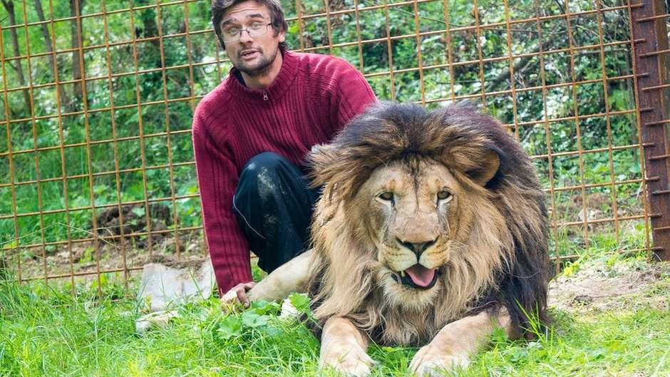 Homem é morto por leão que criava no quintal de sua casa