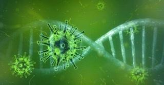 Cepa africana do coronavírus encontrada no Brasil