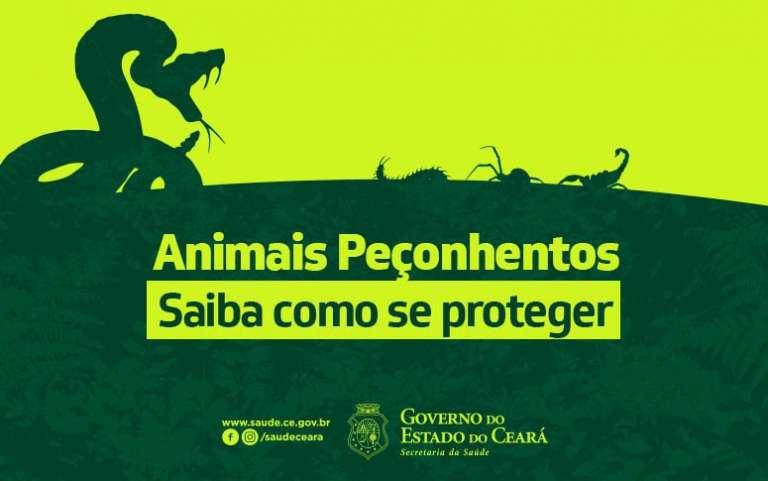 Secretaria da Saúde do Ceará orienta como prevenir acidentes com animais peçonhentos