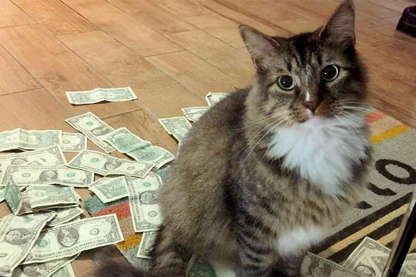 Idosa é presa após treinar seus gatos para roubar os vizinhos