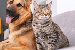 Cães e gatos podem ter Covid, diz pesquisa
